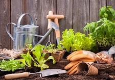 tools & gloves, making gardening safe