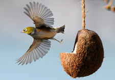 bird feeders, supplements, food, attract the birds