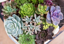 Succulents, outdoor, houseplants, cacti