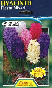 Hyacinth Fiesta Mixed