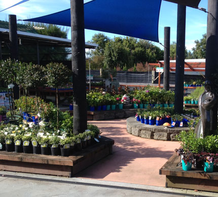 Oderings Garden Centre Napier Quality Plants And Supplies For