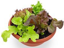 vege bowls, herb bowls, pet bowls